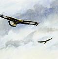 Soaring Golden Eagles by Dag Peterson