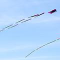 Soaring Kites by Linda Kerkau