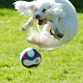 Soccer Dog-1 by Steve Somerville