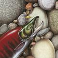 Sockeye Salmon by Jon Wright