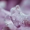 Soft And Subtle by Kerri Farley