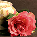 Soft Antique Rose by Brenda Spittle