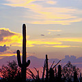 Soft Arizona Sunset Panoramic by Tessie O'Talley