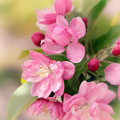 Soft Apple Blossom by Jessica Jenney