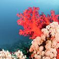 Soft Coral  by Hagai Nativ