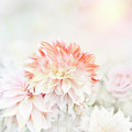 Soft Focus Floral Background by Svetlana Foote