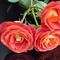 Soft Full Blown Red-orange Roses On Black Background. by Svetlana Cherruty