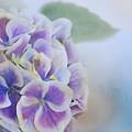 Soft Hydrangeas On Blue by Lynn Bauer