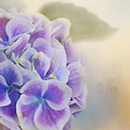 Soft Hydrangeas On Peach by Lynn Bauer
