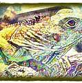 Soft Iguana by Terry Mulligan