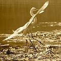 Soft Landing by Carol Groenen