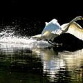 Soft Landing  by Joe Ormonde