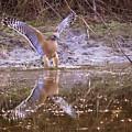 Soft Landing On The Pond by Carol Groenen