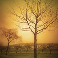 Soft Light In Summerland by Tara Turner