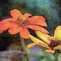 Soft Petals 3058 Idp_2 by Steven Ward
