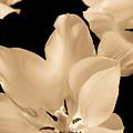 Soft Petals by Trish Tritz