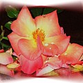 Soft Pink Rose by Judy  Waller