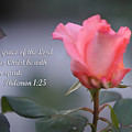 Soft Pink Rose With Scripture by Linda Phelps