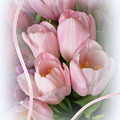 Soft Pink Tulips by Elaine Bawden
