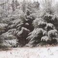 Soft Snow by Tammy Bullard
