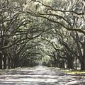 Soft Southern Day by Carol Groenen