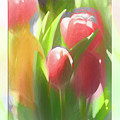 Soft Tulips by Natalie Rotman Cote