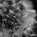 Soft Whisper 4 by Lisa Renee Ludlum
