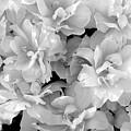 Soft Whites by Deborah  Crew-Johnson