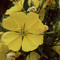 Soft Yellow Flowers by Forrest Prater