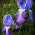 Softly Growing In The Garden by Debra and Dave Vanderlaan