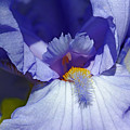 Softly Purple by Debbie Oppermann