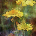 Softly Yellow 3052 Idp_2 by Steven Ward