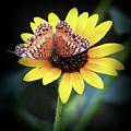 Softness In Nature by Elaine Malott