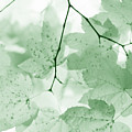 Softness Of Green Leaves by Jennie Marie Schell