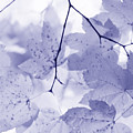 Softness Of Lavender Leaves by Jennie Marie Schell