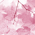 Softness Of Pink Leaves by Jennie Marie Schell