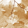 Softness Of Rusty Brown Leaves by Jennie Marie Schell