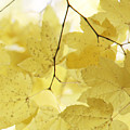 Softness Of Yellow Leaves by Jennie Marie Schell