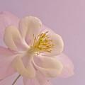 Softy Beautiful by Barbara St Jean