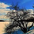 Solace On Silver Lake by Elizabeth Tillar