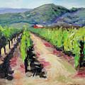 Solano Vineyards by Wyn Ericson