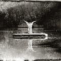 Solar Angel by Bill Cannon