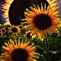 Solar Corona Over The Sunflowers by Debra and Dave Vanderlaan