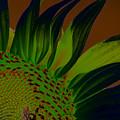 Solar Sunflower by Carolyn Stagger Cokley