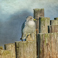 Solitary Gull by Cathy Kovarik