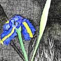 Solitary Iris by Saundra Lee York