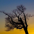 Solitary Tree At Sunset by Beth Myer
