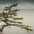 Solitary Tree by Fernando De La Cruz
