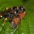 Solitary Wasp by Bob Kemp
