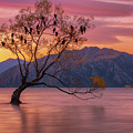 Solitary Willow Tree by Kamrul Arifin Mansor